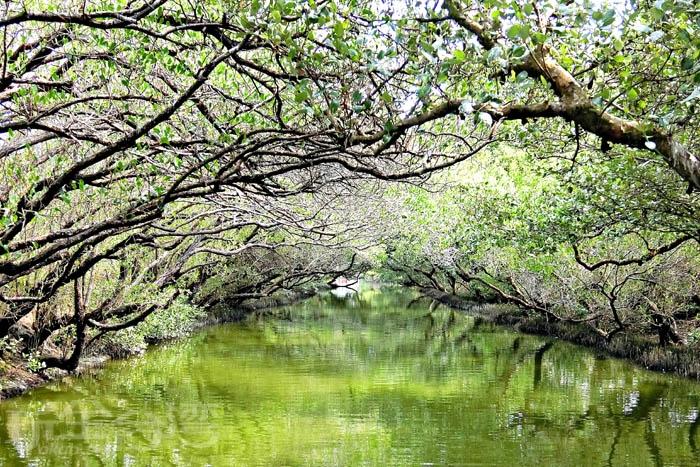 有台灣袖珍版亞馬遜河之稱,果然名不虛傳,真的超美。/玩全台灣旅遊網特約記者阿辰攝