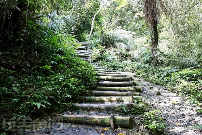圖中這段步道我覺得不好走,因為下雨或者溼氣重時,木頭會濕濕的,感覺走起來會滑滑的,所以走的時候可要小心一點!/玩全台灣旅遊網特約記者阿辰攝