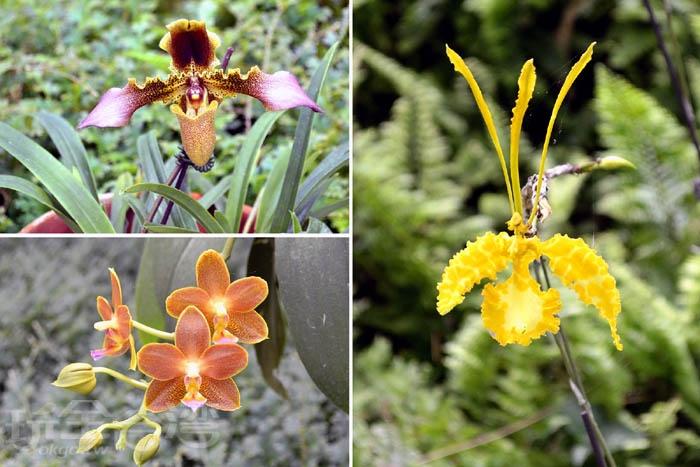 在溫室裡欣賞各品種蘭花,覺得有喜歡的話,園區也有提供販賣喔!/玩全台灣旅遊網特約記者阿辰攝