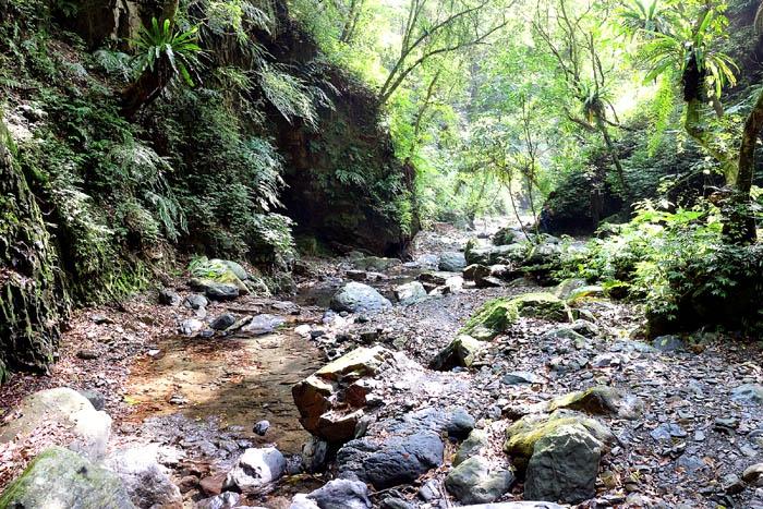 沿路林木蒼鬱成蔭,感覺還蠻清涼舒適。/玩全台灣旅遊網特約記者阿辰攝