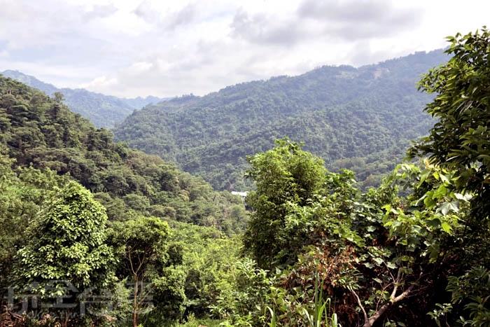 農場略高的地勢讓視野遼闊,眼睛大深呼吸!/玩全台灣旅遊網特約記者阿湖與阿釵攝