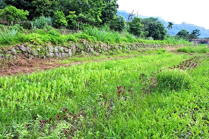 taso ci cou有機農業發展協會採用秀明自然農法,保持最天然的模樣栽種作物/玩全台灣旅遊網特約記者阿辰攝