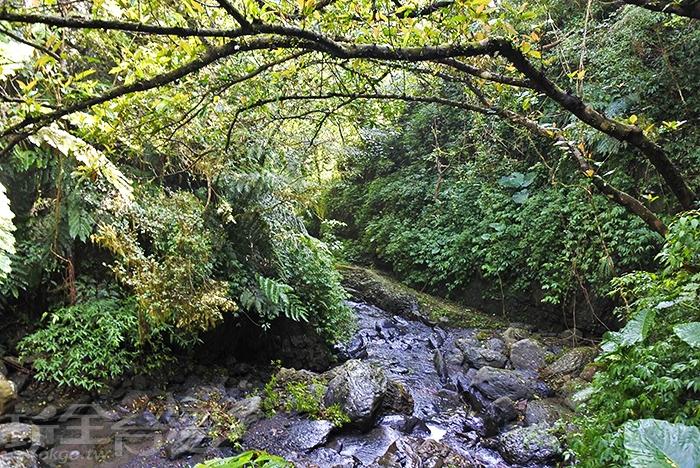 享受森林時光,石磐瀑布必看。/玩全台灣旅遊網特約記者阿辰攝