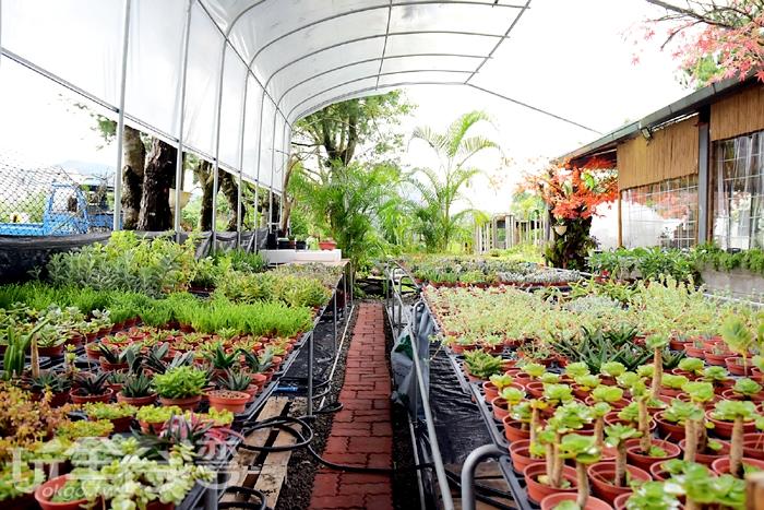 館內提供許多種類的多肉植物讓您挑選/玩全台灣旅遊網特約記者阿辰攝