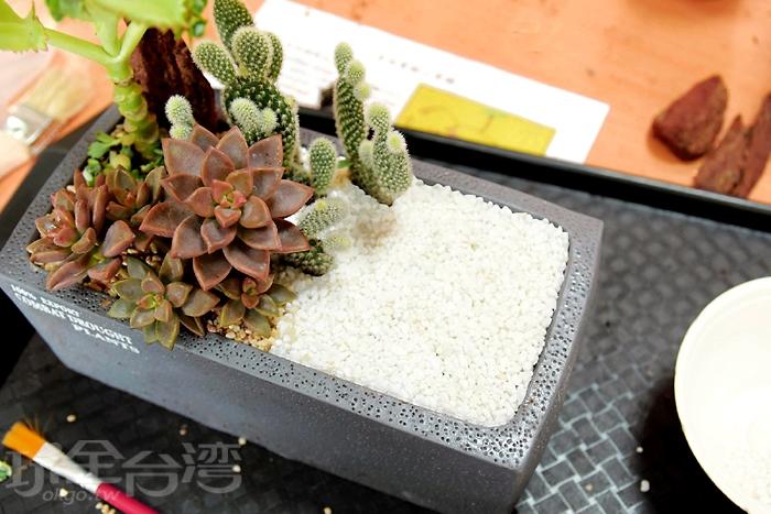等到植物都種到盆栽之後,再來就是要在空出來的地方開始來增加一些擺飾,首先就是要來鋪上一層彩砂來增加美觀!/玩全台灣旅遊網特約記者阿辰攝