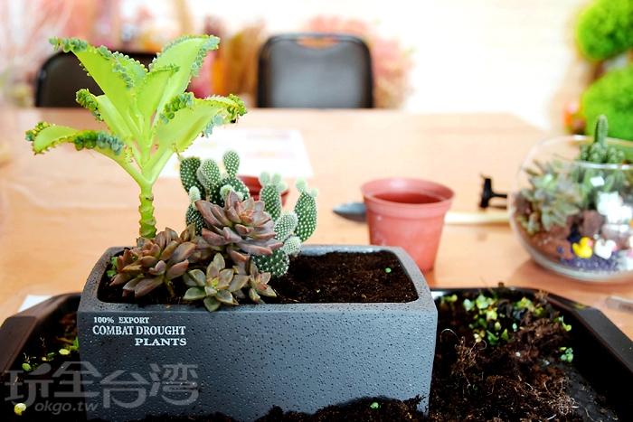 接著來安排植物種植區塊,然後就可以開始挖土將植物種在盆栽裡~/玩全台灣旅遊網特約記者阿辰攝