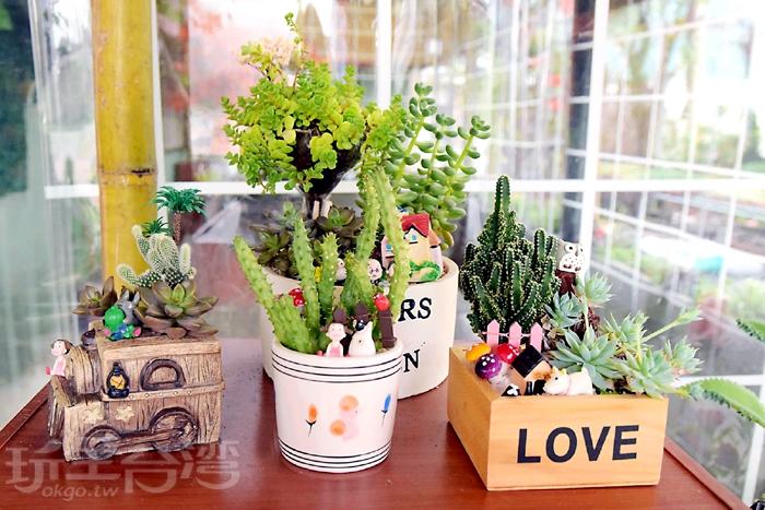 店家會依所挑選的容器建議盆栽數量/玩全台灣旅遊網特約記者阿辰攝