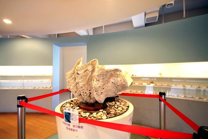 貝殼館/照片提供_玩全台灣旅遊網