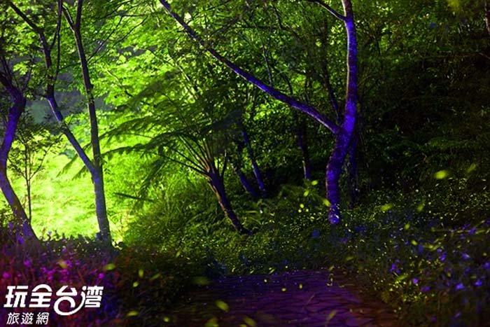 鹿谷螢火蟲季/玩全台灣旅遊網攝