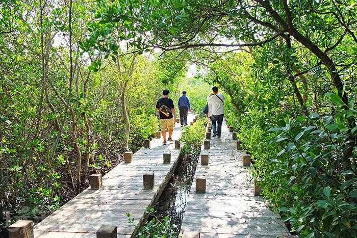 這條步道還蠻長的,很有探險的感覺,我們一步步深入生態園的中心地帶/玩全台灣旅遊網特約記者阿辰攝