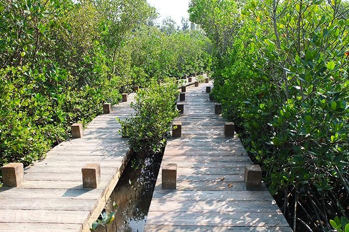 沿著步道前進,一行人在紅樹林生態裡與自然嬉戲/玩全台灣旅遊網特約記者阿辰攝