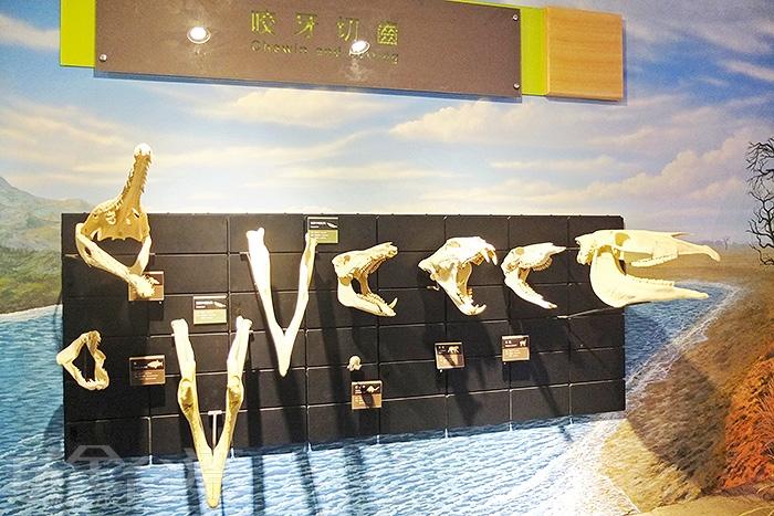好多骨骼標本,參觀的遊客就發揮公德心/玩全台灣旅遊網特約記者阿辰攝