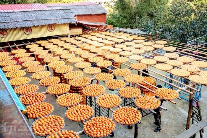 黃澄澄的柿餅是攝影者爭相拍照的天堂。/玩全台灣旅遊網特約記者隱月攝