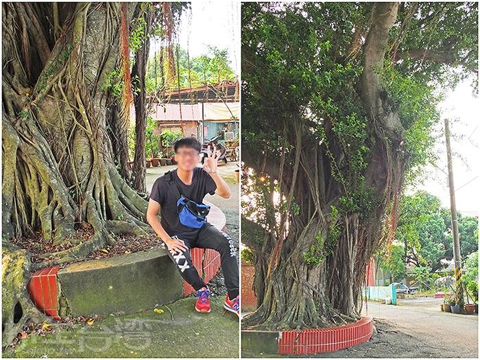 魚寮靈殿宮前的老樹下也是《俗女養成記》拍攝場景之一。/玩全台灣旅遊網特約記者阿辰攝
