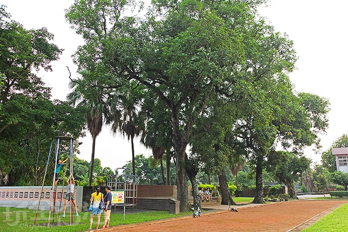 校園裡的老樹群也是賞玩焦點,真的是透過在地人介紹才知道!/玩全台灣旅遊網特約記者阿辰攝