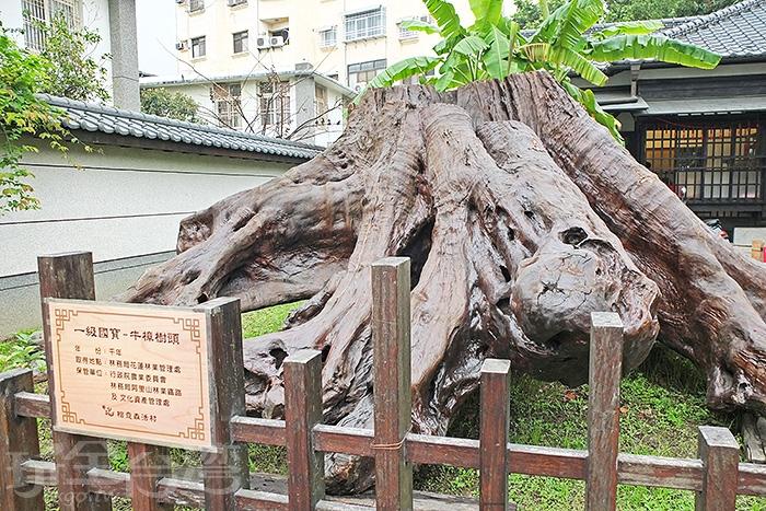 千年的牛樟樹頭醒目矗立在園區一旁,未免也太珍貴的存在了吧!/玩全台灣旅遊網特約記者阿辰攝