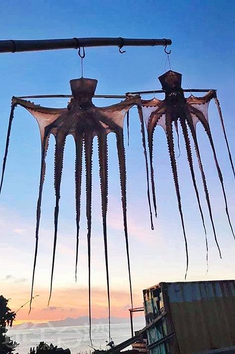 達悟族人也會將章魚風乾,看著也非常有趣味。/玩全台灣旅遊網特約記者隱月攝