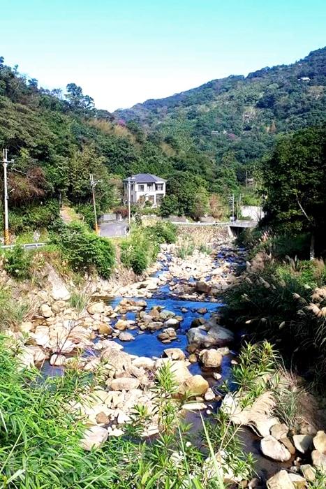 三峽熊空櫻花林位於山林小溪間。/玩全台灣旅遊網特約記者隱月攝