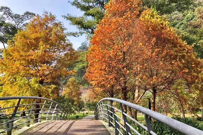 季節限定的美麗景色。/玩全台灣旅遊網特約記者隱月攝