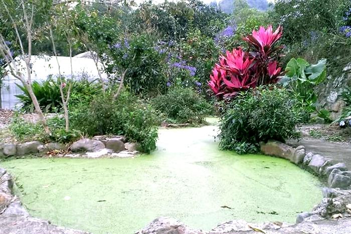 農場裡還有個小巧玲瓏的小池塘。/玩全台灣旅遊網特約記者隱月攝