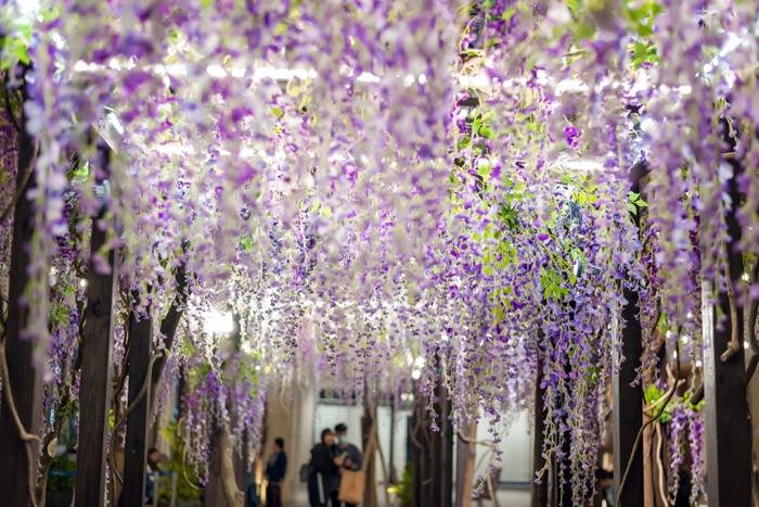 紫藤花廊/MITSUI OUTLET官方提供