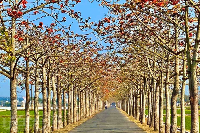 筆直的林初埤木棉花大道。/玩全台灣旅遊網特約記者單雪攝