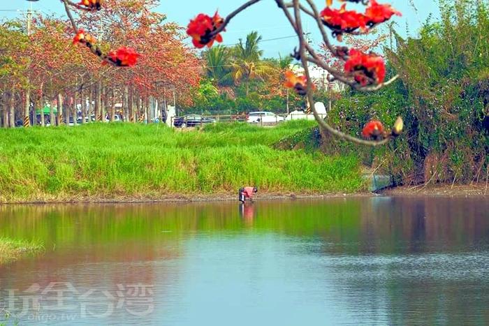 原本為灌溉用水塘的林初埤。/玩全台灣旅遊網特約記者單雪攝