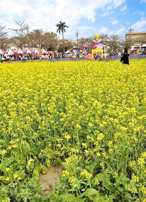 這兒也可以見到油菜花海。/玩全台灣旅遊網特約記者洋甘菊小姐攝