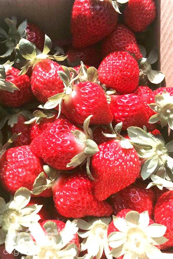 酸酸甜甜就是浪漫的滋味‧草莓季來囉~快點投入這粉紅世界吧~