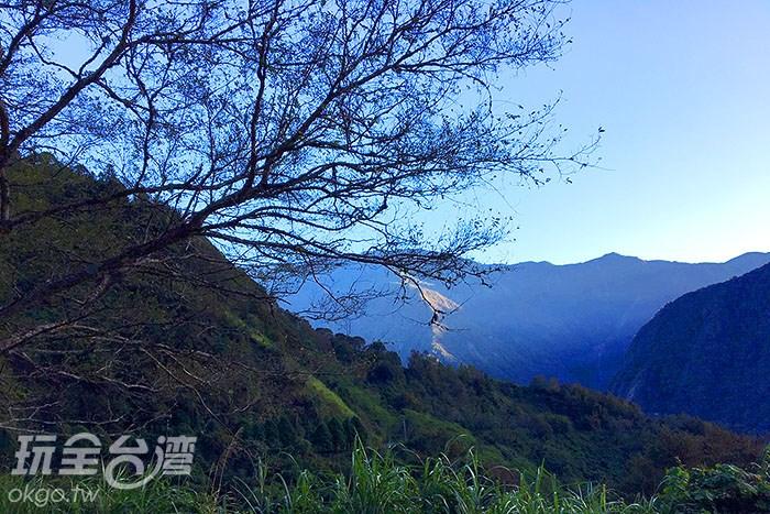 寒流來襲!春天來臨前的最後一波!咦?怎麼每個小草上都有白白的羽毛?
