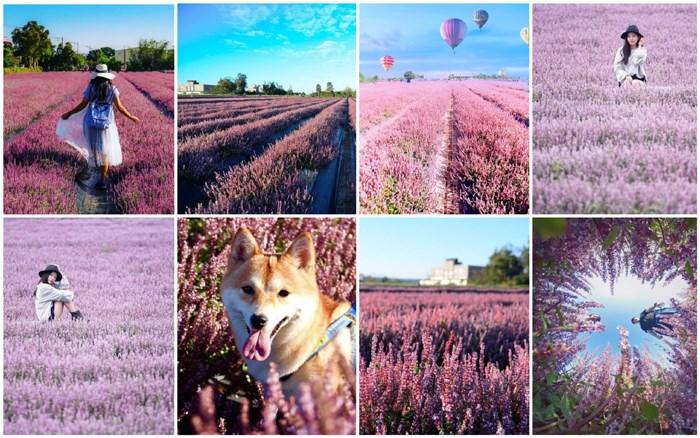 【花彩節】超浪漫的紫色花海在哪裡?快點來桃園一起感受普羅旺斯的夢幻吧~