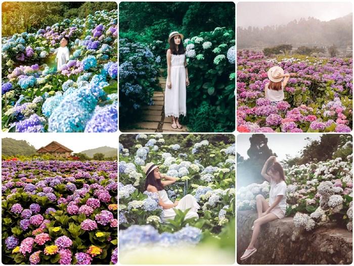 【期間限定】繡球花季來溜~現在正對時!!走吧!我們一起上山賞花去!