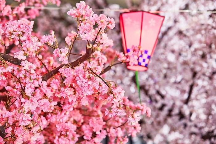 想在春日夢幻花景包圍下,來場浪漫愜意的野餐輕旅行嗎?現在就出發!