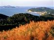 生態賞鷗暨海上看馬祖 7月1日啟航賞遊生態之美