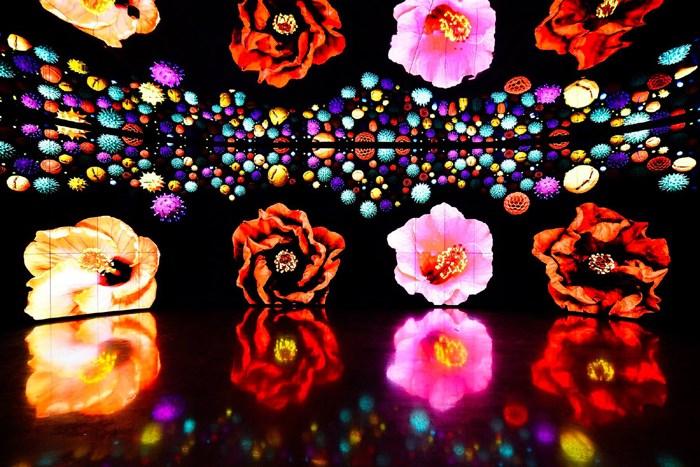2018世界花卉博覽會在台中!一起來聆聽花開的聲音吧!!