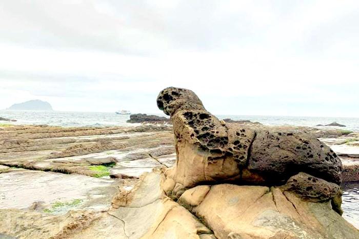 【秘境】超可愛的海豹岩就在這神秘的大坪海岸!從這眺望出去也太美了吧!