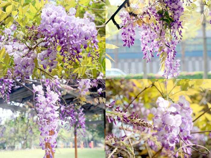 【野餐慢時光】在紫色的浪漫花海裡野餐的感覺實在是特別浪漫啊!!!!