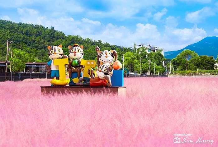 【南投景點】還記得這片浪漫的粉紅花海嗎?今年開始盛開囉!!!