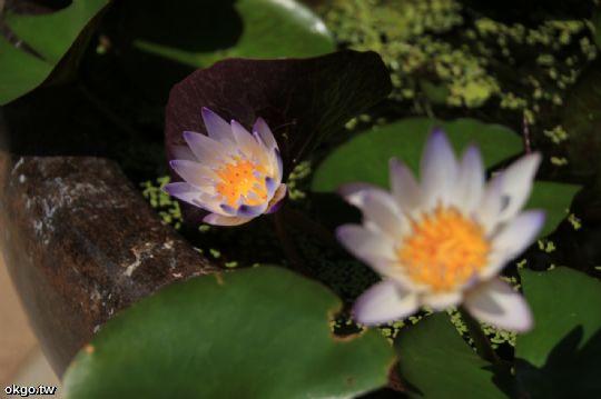 動植物 相片來源:瑞里詹德仁茶園民宿