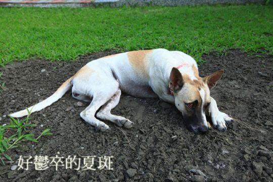莊主愛犬 相片來源:屏東民宿.幸福莊園庭園民宿