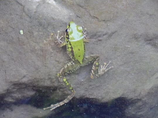 民宿自然生態景觀 相片來源:內灣山居森活民宿