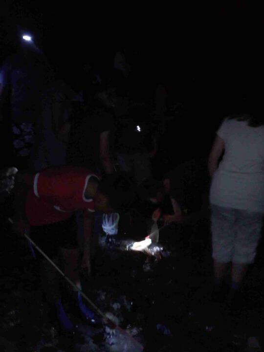 夜間河中生態 相片來源:新竹內灣尖石武林帖