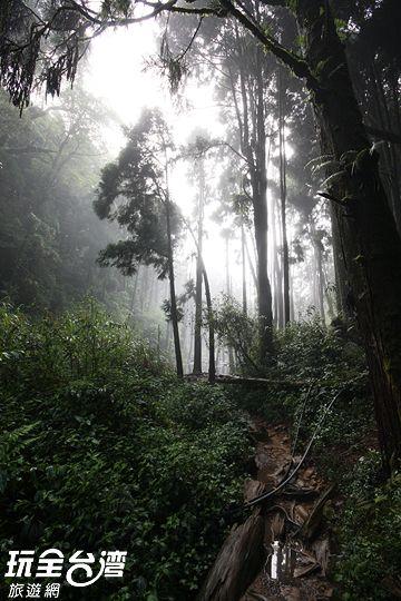 抵達忘憂森林,由於是泥濘的沼澤地需注意