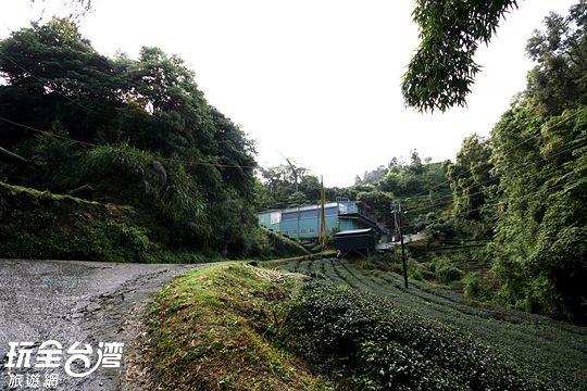 看到鐵皮屋搭建的草(水土 ㄉㄧˋ)仔製茶廠表示結束一路的陡坡,往製茶廠方向前進可以看見指標