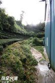 草(水土 ㄉㄧˋ)仔製茶廠與茶園間有條通往忘憂森林的小徑,步行約3-5分鐘即可抵達忘憂森林的入口