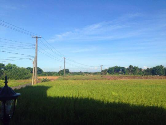 夏天稻田綠地