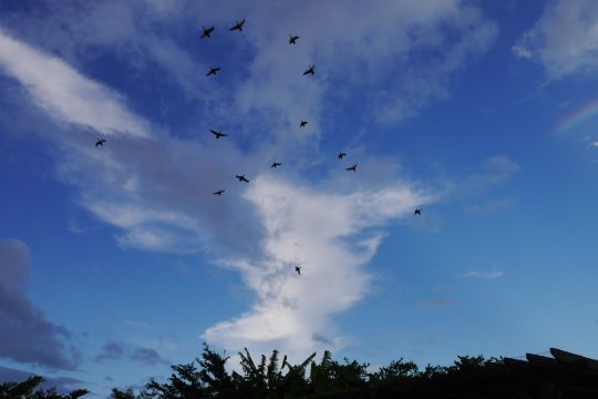 藍天.彩虹.候鳥 相片來源:礁溪星嵐民宿