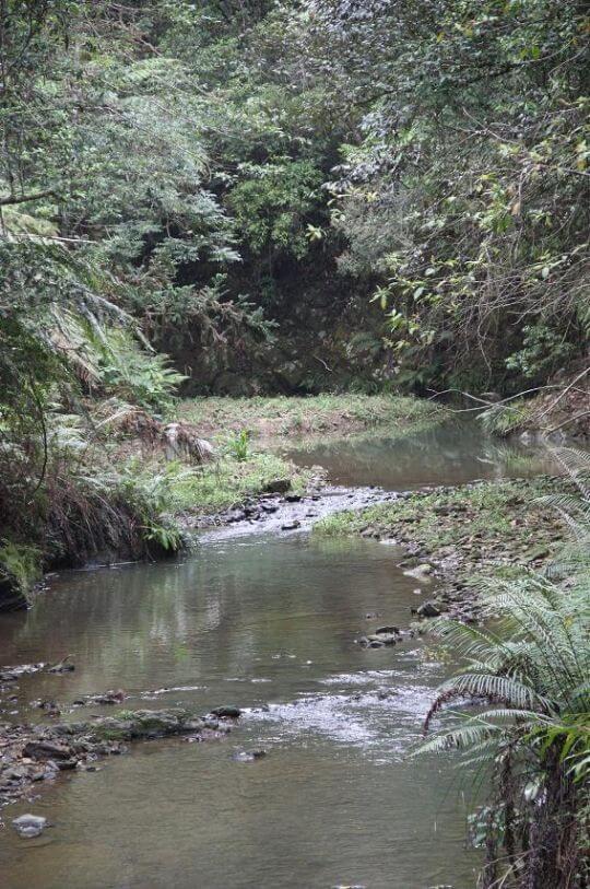 水上平台森林步道 相片來源:日月潭民宿~紅茶工房
