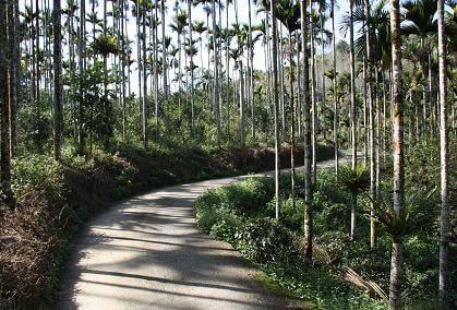 通往紅茶工房老茶園的世界 相片來源:日月潭民宿~紅茶工房