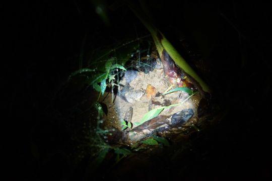 猜猜看青蛙在哪呢?!